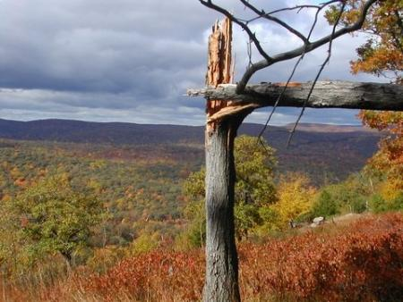 The autumn leaves, on the Appalachian Trail, Bear Mountain, looking south-west, October 22, 2005