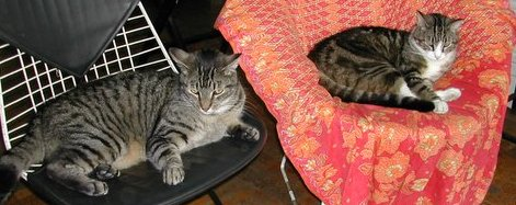 Loco and Luca relaxing in chairs ...